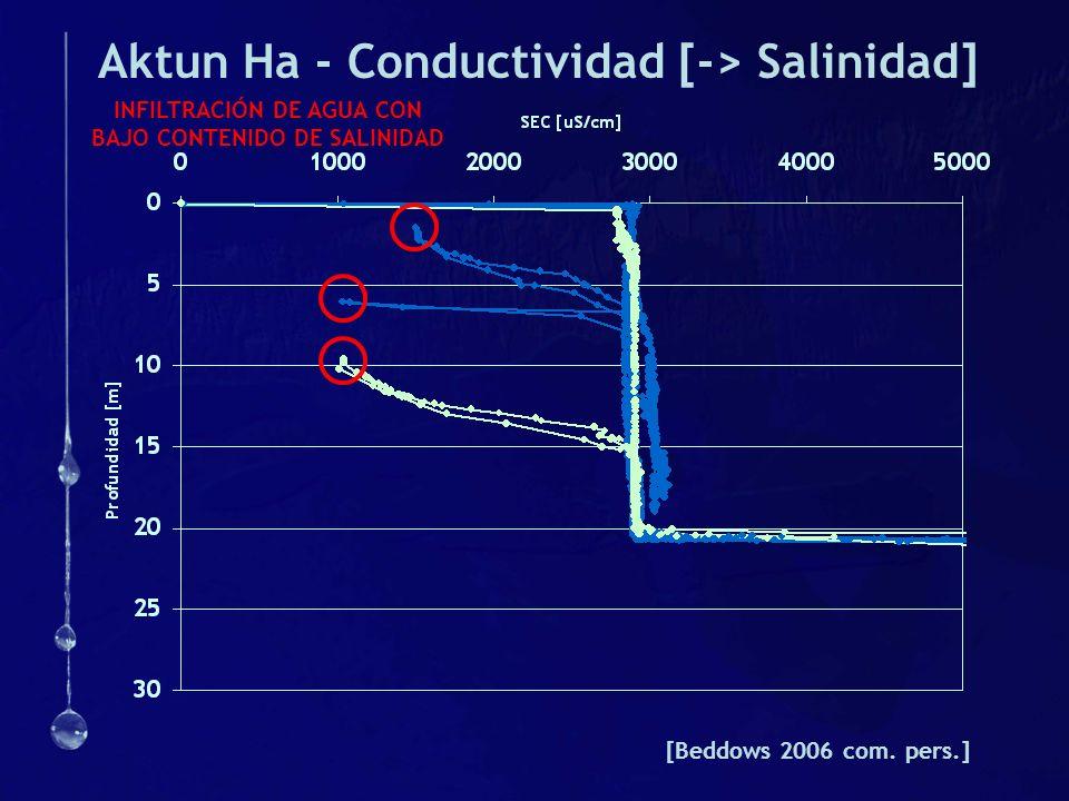 Aktun Ha - Conductividad [-> Salinidad]